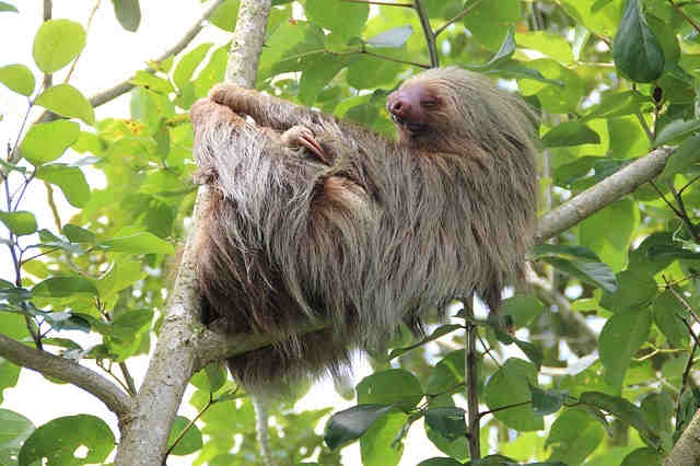 Are sloths mean