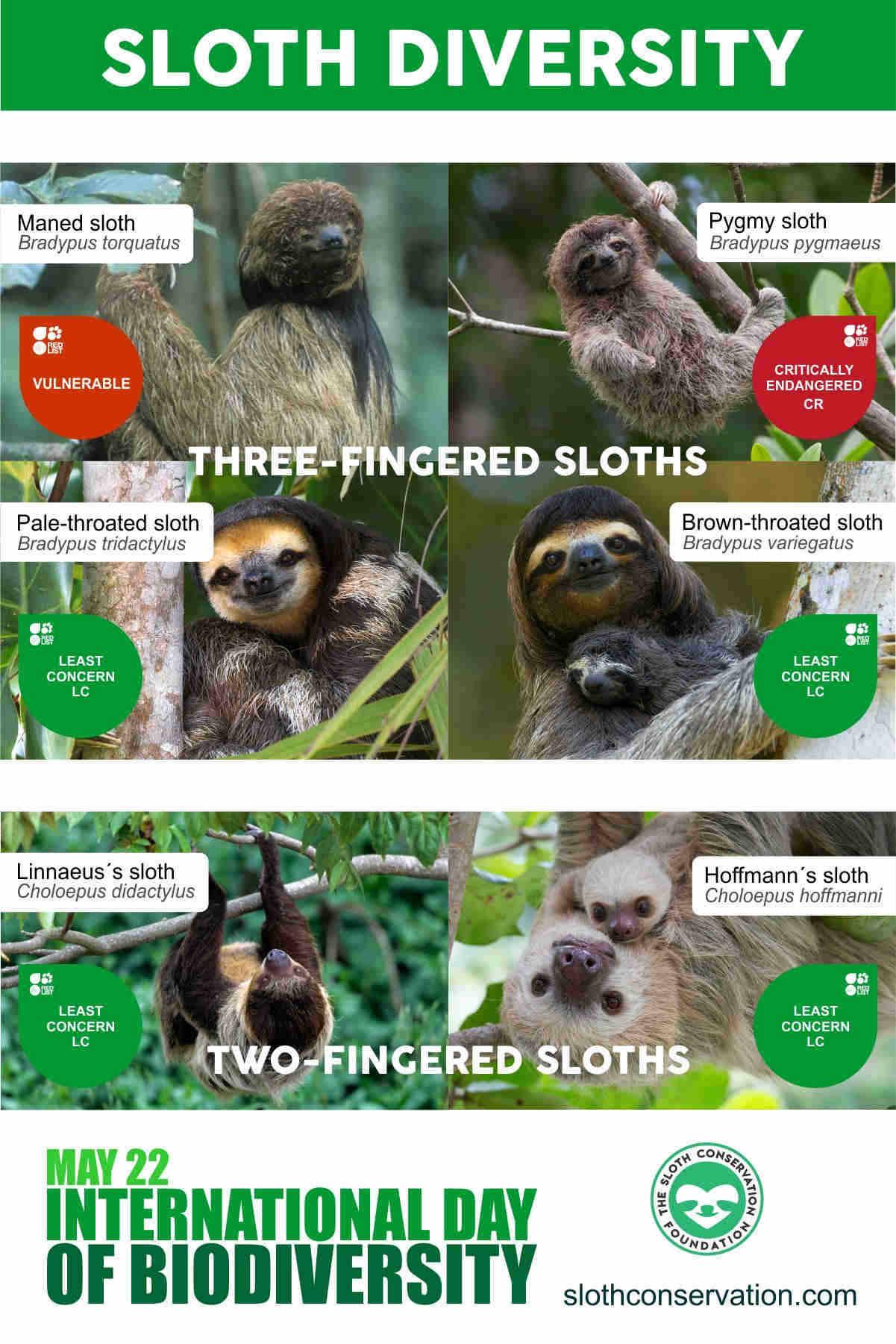 Sloth Species