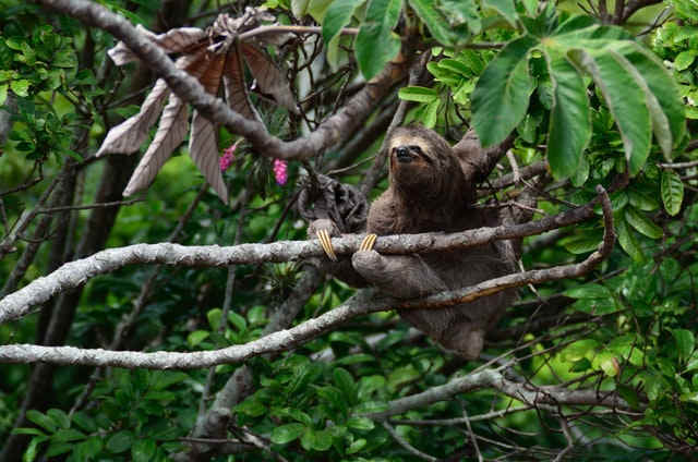 how long do sloths live