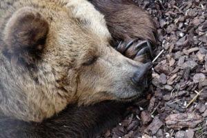 what animals hibernate