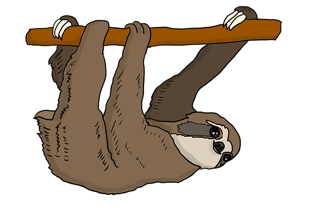 do sloths have tails