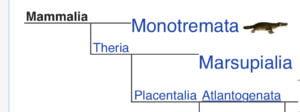 Three clades of mammals