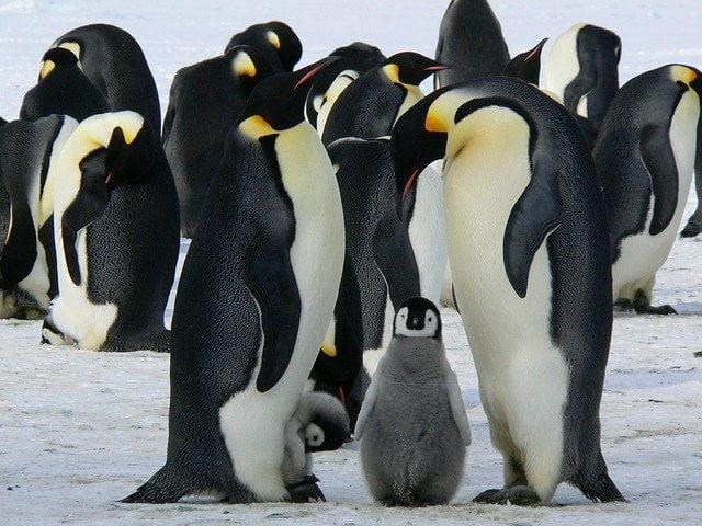 Where do penguins live
